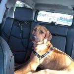 rhodesian car ride