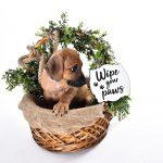 rhodesian ridgeback texas puppy breeder