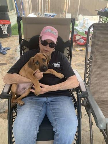 Best Family Dog in Abilene