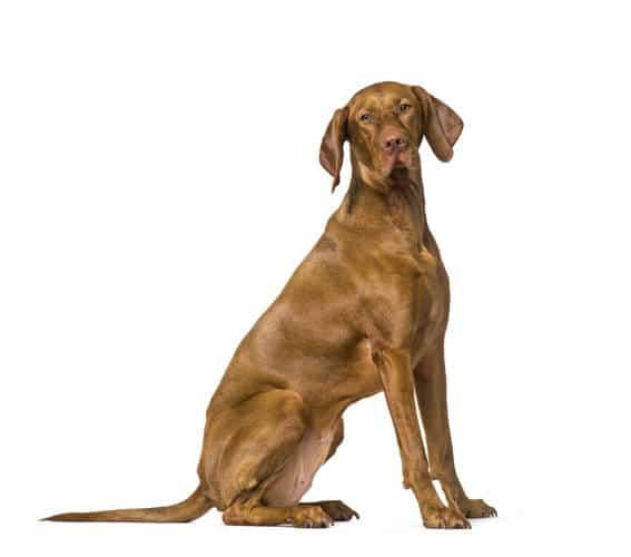Best Family Dog in Arlington
