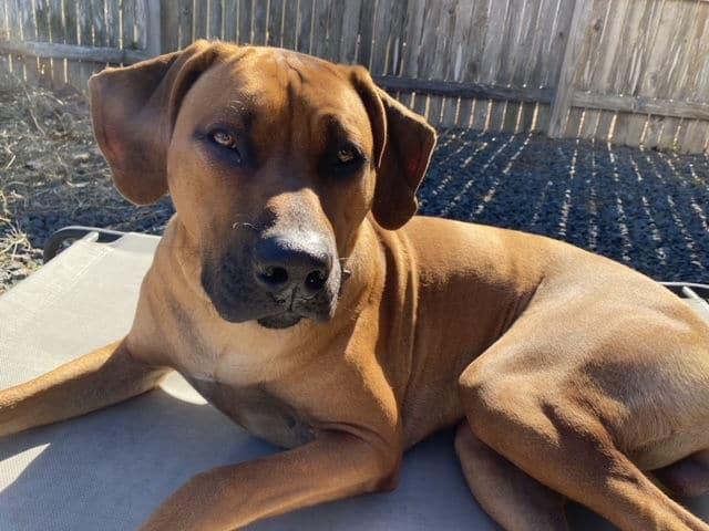 Best Family Dog in Baytown