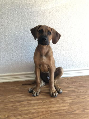 Best Family Dog in Bryan