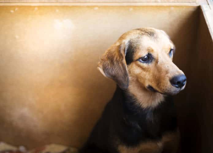 Best Family Dog in Carrollton