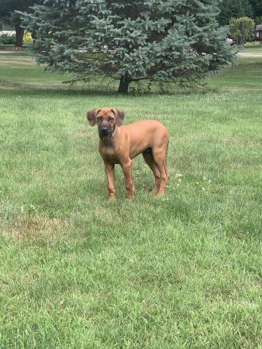 Best Family Dog in Cedar Park