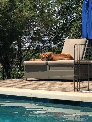 Best Family Dog in Corpus Christi