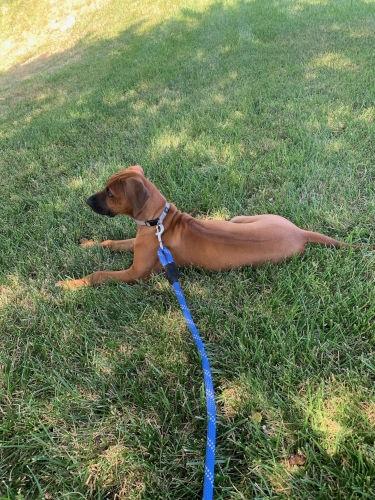 Best Family Dog in Kerrville