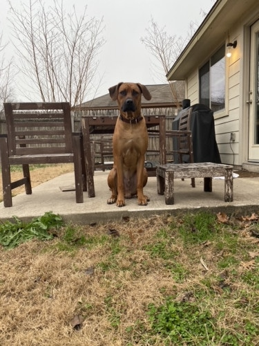Best Family Dog in Round Rock