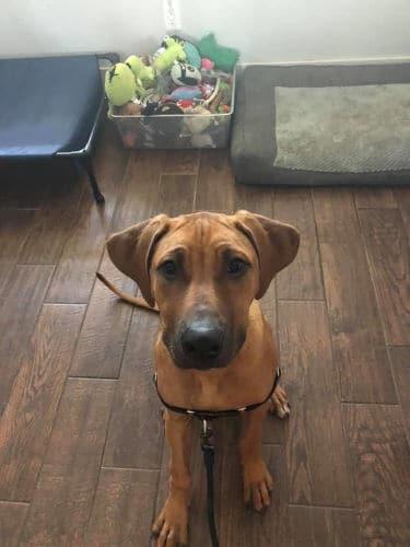 Best Family Dog in Waco